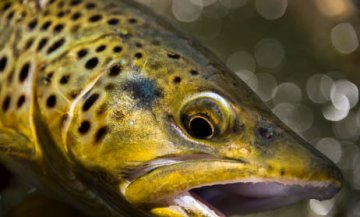 Montana fishing guides