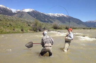 netted trout fly fishing montana guided trip