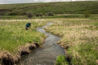 spot and stalk montana guided trip fly fishing