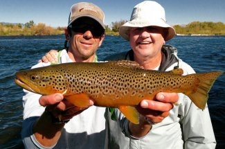 brown trout montana adventure fly fishing guided trip fishing