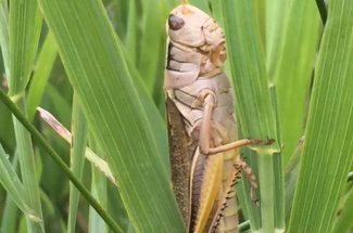 grasshopper montana guided trip fly fishing