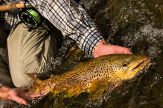 catch and release yellowstone national park fly fishing montana