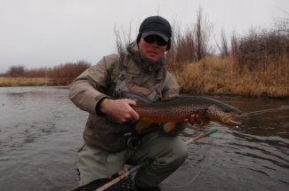 Nice Clark Fork Brown Trout