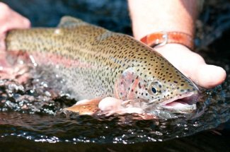 Fly Fishing the Kootenai River in Montana