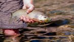 Fly Fishing the Spotted Bear River in Montana