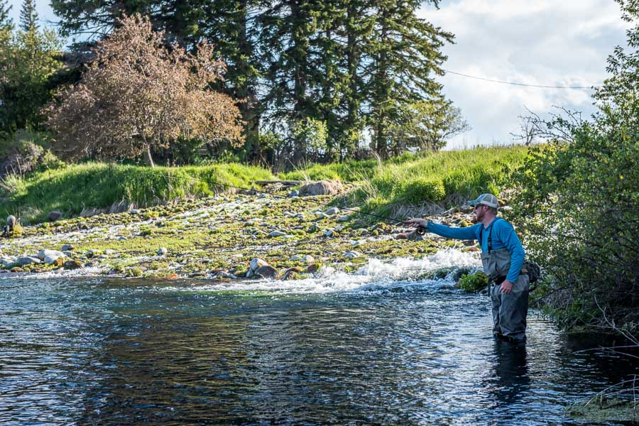 Positioning yourself for a good drift is critical on Spring Creeks