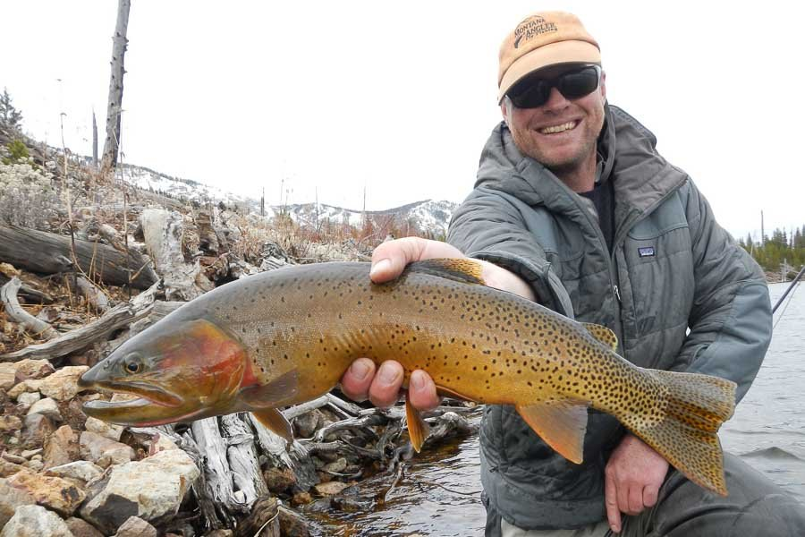 Yellowstone National Park Cutthroat Trout