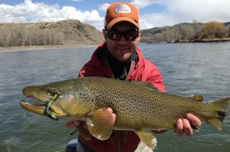 huge brown trout fly fishing montana adventure guided trip