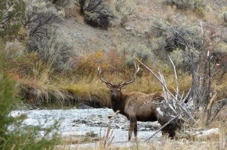 elk montana river fly fishing