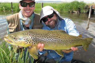 montana fly fishing brown trout river guided trip