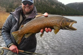 montana angler guided trip fly fishing brown trout