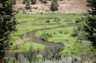 stream creek montana guided trip private water fly fishing adventure