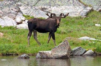 moose velvet montana fly fishing`