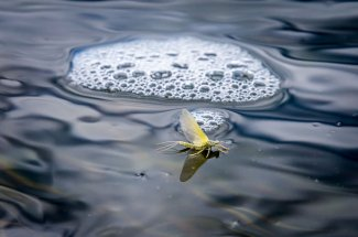 hatch fly fishing mayfly montana guided trip adventure