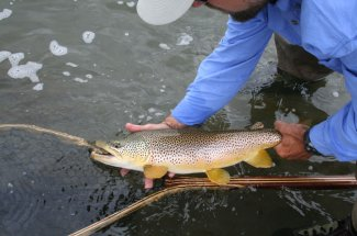 fly fishing montana guide yellowstone national park