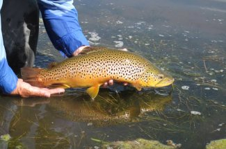 catch and release montana fly fishing yellowstone national park guides