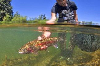 guide yellowstone national park fly fishing rainbow trout