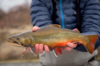 guided brook trout fly fishing montana yellowstone national park