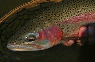 Montana Angler Fly Fishing