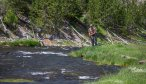 Montana Angler offers guided fishing in Yellowstone National Park