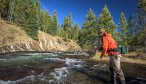 The Gibbon River is a blue ribbon stream in Yellowstone National Park